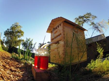 Потоковый улей для пчел